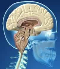 Enfermedad del Filum - descenso_amigdalar